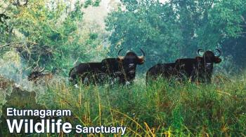 Eturnagaram Wildlife Sanctuary